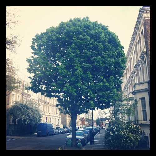 Beauty of the Tree. #trees (Taken with instagram)