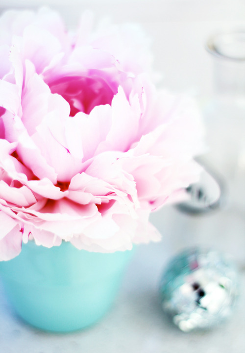 cute pink ranunculus in a light blue vase