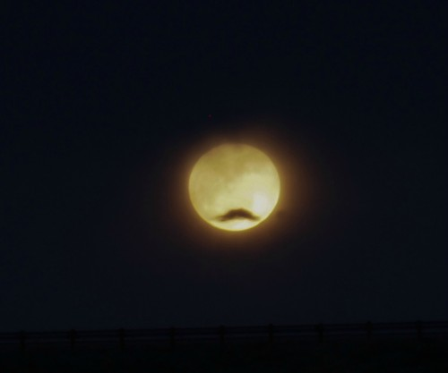 themustacher:  I see the moon and the supermoon sees…mustache!?!?Thanks, www.Spaceasaurus.com !!!  Supermoons and mustaches go together like nebulae and ionized gases!
