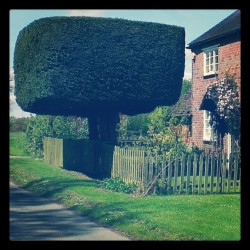 Hammer, hammer, hammer hedge! (Taken with instagram)