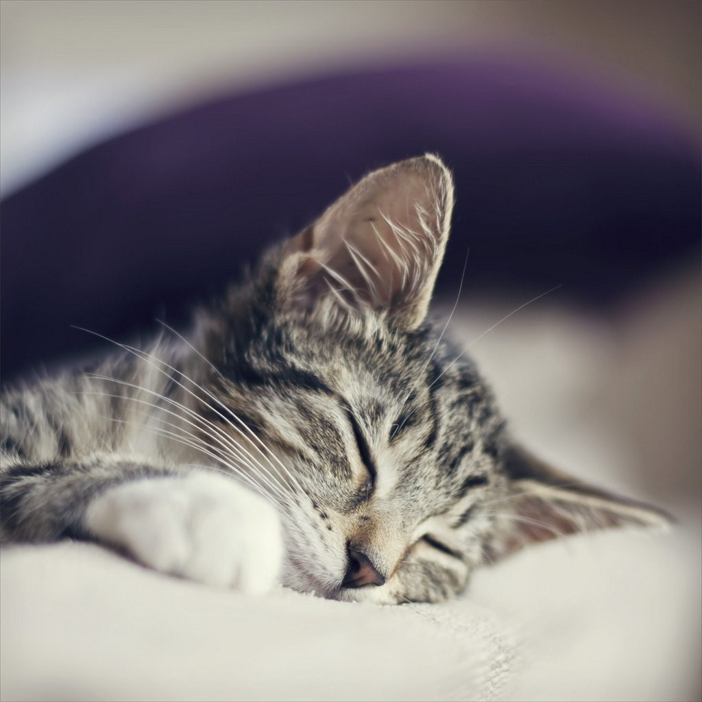 snooze (by Black Cat Photos)