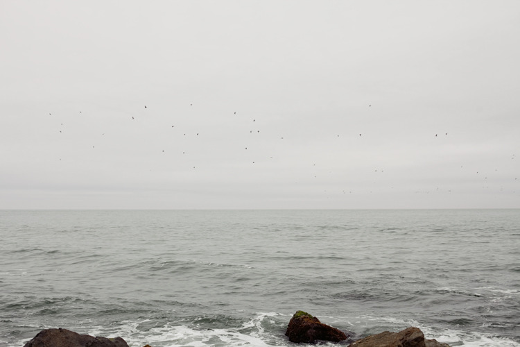 Flock of birds near Montauk.  5.5.12.  Montauk, NY.