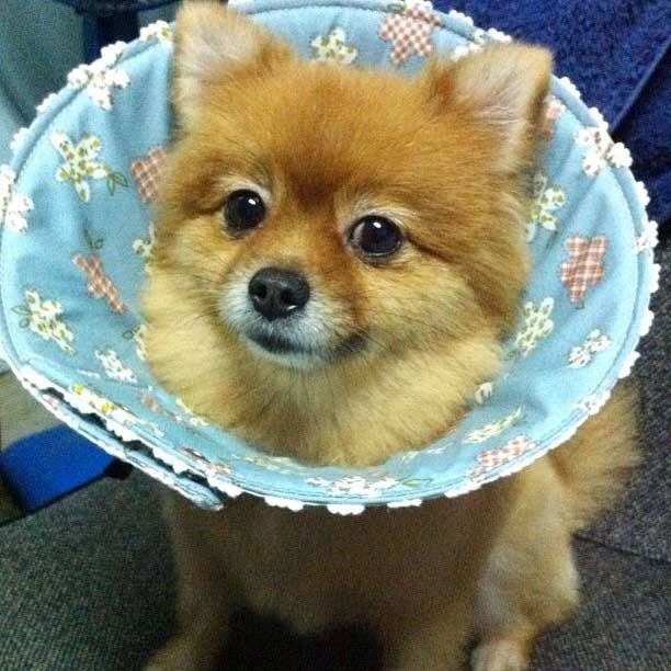What a cute cone! From @mooping_pom  (Taken with instagram)
