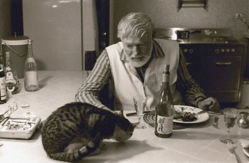 Dinner time for Hemingway and kitty. The kitty inherited everything.