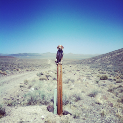 maddieonthings:  Tomopah, NV