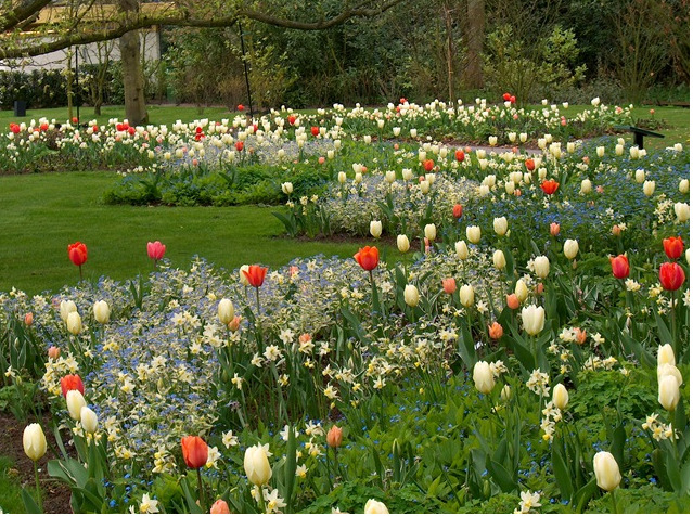 Naturalistic bulb planting:  Part of a 10 acre garden at Keukenhof near Lisse, Holland designed by Dutch garden designer, Jacqueline van der Kloet, showing this new way to plant bulbs.