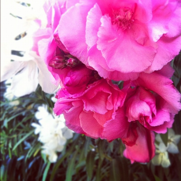 Flora (Taken with Instagram at Babe Barn)