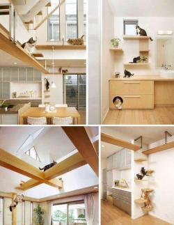 room design for cats!