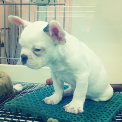 I want This little guy #puppy #socute (Taken with instagram)