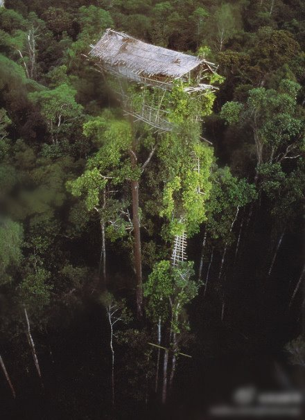 freakin bosssss!  World's highest native tree house