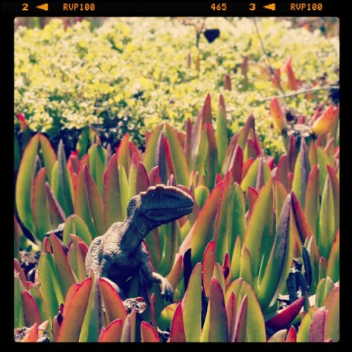 crispystix:  Toy_dino2 (Taken with instagram)