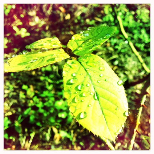 Post Storm Green. Matty ALN Lens, Blanko Film, No Flash, Taken with Hipstamatic