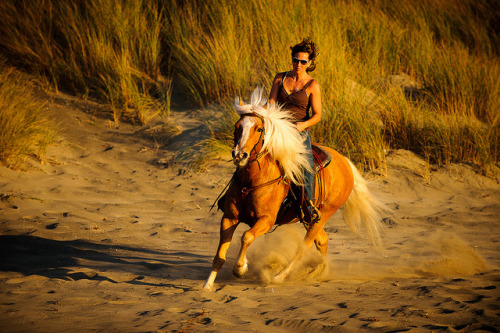 thisismyspirit:  Horses on Beach at Sunset by howardignatius on Flickr.