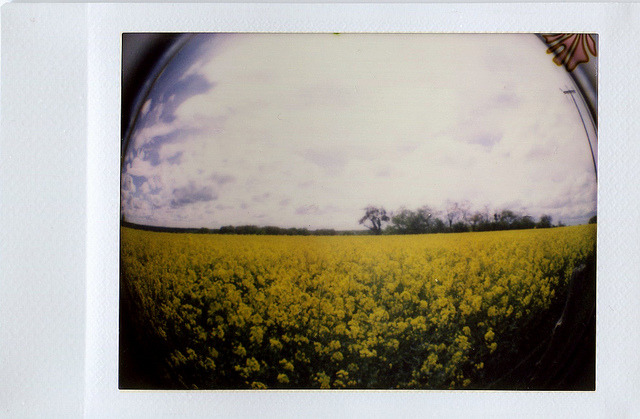 Field of Yellow on Flickr.Flowers bursting in the fields of France. © Bree Sage http://seebreebefree.wordpress.com/
