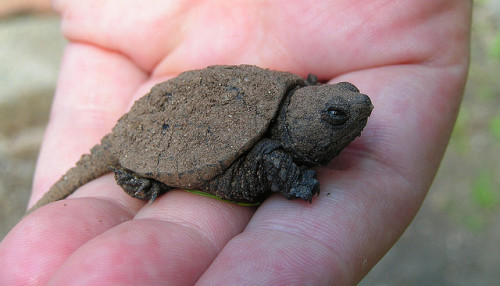 worldlyanimals:  BABY SNAPPER! by Hopefoote, Ambassador of the Wow on Flickr.