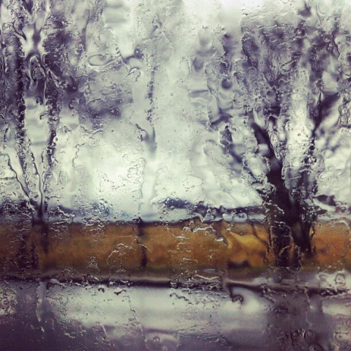 Kos på en #rainy #day (Taken with instagram)