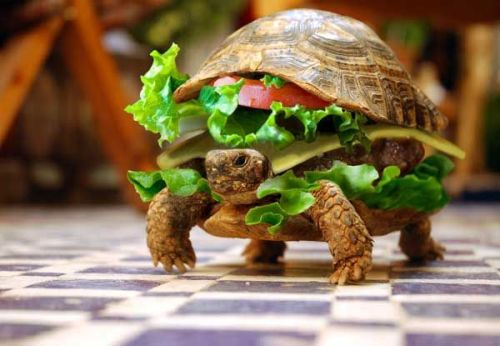I'll take the turtle special with a side of fries, please.