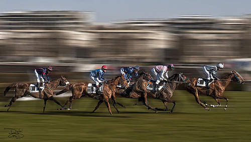 nprfreshair:  On average, 24 horses die each week at race tracks in the U.S. Many horses that break down run with injuries masked by injected painkillers. On tomorrow's Fresh Air, we talk to investigative reporters Walt Bogdanich and Joe Drape about their investigation into American racing.  Longchamp Horse Racecourse- Paris, France - Hippodrome de Longchamp (by DiGitALGoLD)