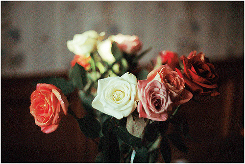 35bit:  roses from home (by milki.c)