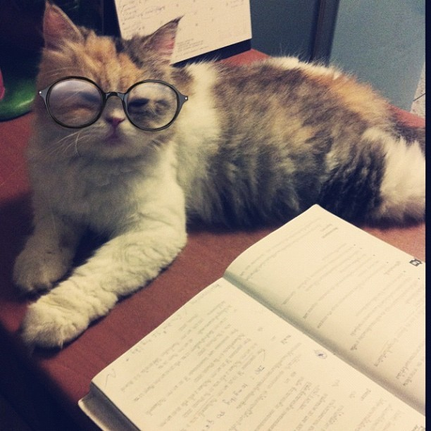 thefluffingtonpost:  Cat Suspects She May Have Grabbed the Wrong Glasses Numerous reports into The Fluffington Post indicate that an area cat accidentally took home the wrong pair of glasses from the vet.  According to witnesses, the cat began to suspect she may not have her spectacles when she had trouble seeing her textbook. Others suspect, however, that the glasses are fine and the cat is just putting on a charade to avoid completing her AP History homework due tomorrow. Via rose_um.