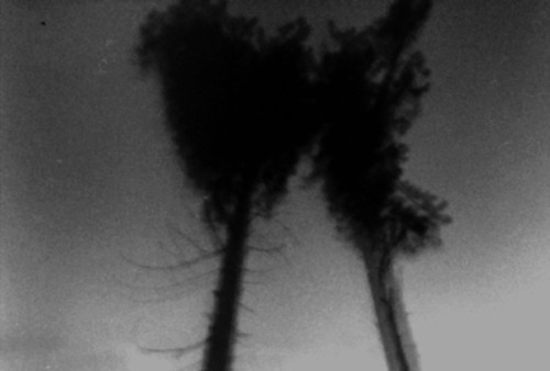 LS 07|Trees Submissions - Unmanned bodies by Massimo Barberio All images © courtesy of Massimo Barberio http://www.fotovisura.com/user/massimobarberio