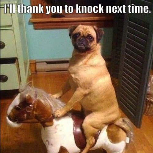 I'll thank you to knock next time (Taken with instagram) #pug