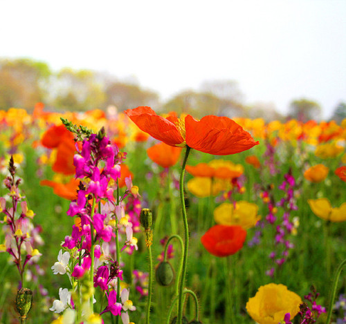 Spring Flowers by Jay.Shankar on Flickr.