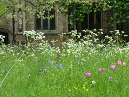 Church Yard Meadow by anataman on Flickr.