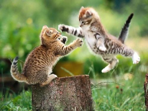 llbwwb:  Get moving! via:cutestuff. It's time for Animal Hour :))