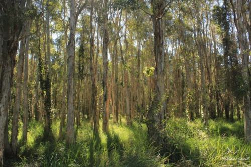 Boondal Wetlands is a lovely little oasis of mangroves, eucalypt forest and swampy melaleuca woodland located within Brisbane's leafy suburbs.