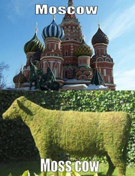 follow-haha-funny-lol:  Moscow Vs. Moss Cow More