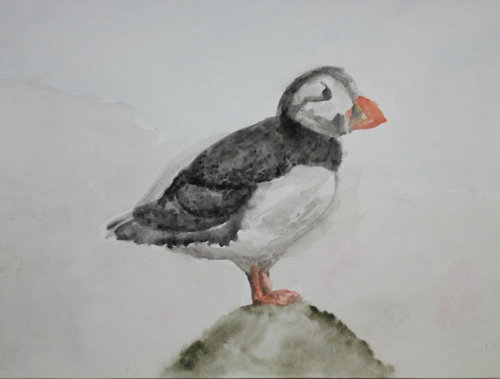 Puffin painting. Medium: Watercolor