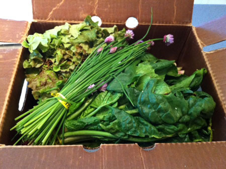 We picked up our first CSA share last night from Grinnell Heritage Farm and let me tell you, having a weekly supply of organically grown veggies from farmers we know is one of the best things about the warmer weather. We'll need to get into a groove with eating the crazy amount of greens we have between our CSA and our own garden, but I think that's a good problem to have. Check out localharvest.org to find a CSA (Community Supported Agriculture, where you pay a local farmer ahead of the growing season for a steady supply of produce all season long) near you.