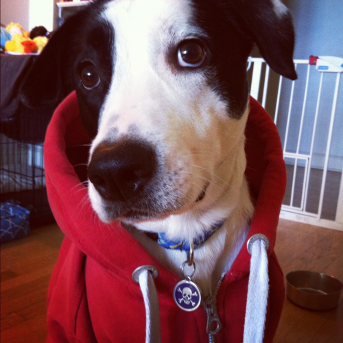 worldwarmike:  xFinnx (hardcore hound)  Finn looks great in a hoodie!