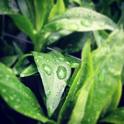 Droplets #rain #water #instagram #iphone #tiltshift #igram #ig  (Taken with instagram)