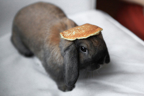 peppery-skin:  Yet another Bunny with a Pancake on its Head by johncatral on Flickr.