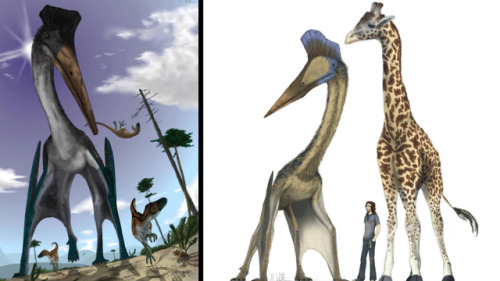 yourowl:  OMG how unbelievable does this pterosaur look??? It could run and walk using all four limbs AND fly hundreds of miles at a time. IT IS SO FREAKING COOL. Granted, as the article points out, having them alive today would mean the risk of being hit by bird doo from an animal much much bigger. Imagine that hurtling toward your car…. Also, this. crownedrose:   What would life be like if pterosaurs were alive today?  io9.com discusses the theoretical life of pterosaurs if they were alive with us today. No dinosaurs here, though. Pterosaurs are flying reptiles; they are not dinosaurs. Could you ride Quetzalcoatlus to work? How would they act in today's world? What were they really like if we found them exactly as they were during the Mesozoic (aka we didn't screw with their genetic makeup)? What would they taste like?  Find out for yourself and read the article on io9.com.