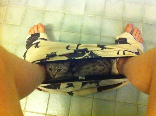 carlosae88:  Yo tengo un gato en mis pantalones  no place is safe from creeper cats