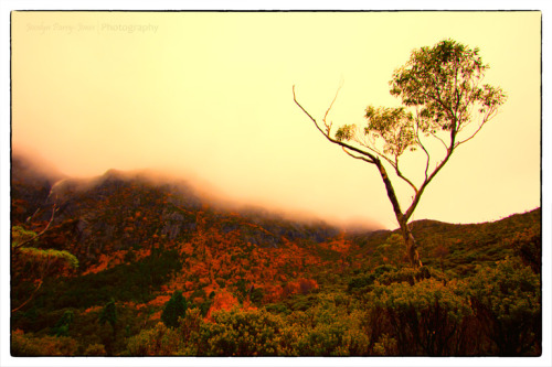 This photograph was taken at Cradle Mountain (Tasmania, Australia) The yellow trees are called Fagus, which is Australia's only deciduous tree. Camera: Canon EOS 60DLens: Canon 10-22mm