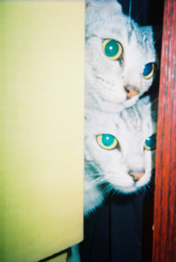 247bigtime:  The cats, Malacca by Amiza Nur Leica Mini II