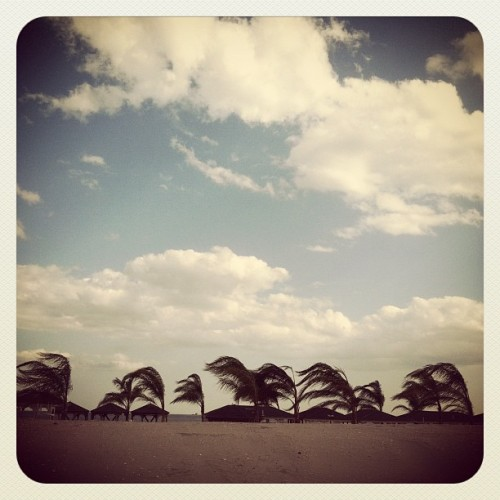 #atlanticcity #dunes #palmtrees (Taken with Instagram at Boardwalk)