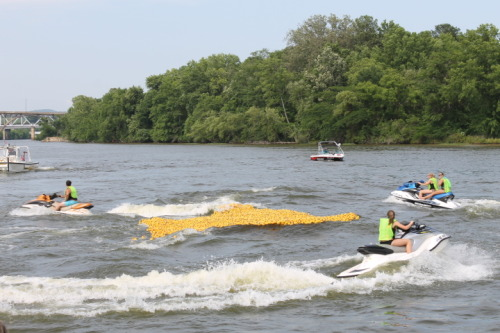 People on jet-skis moving the rubber ducks down the Coosa River.