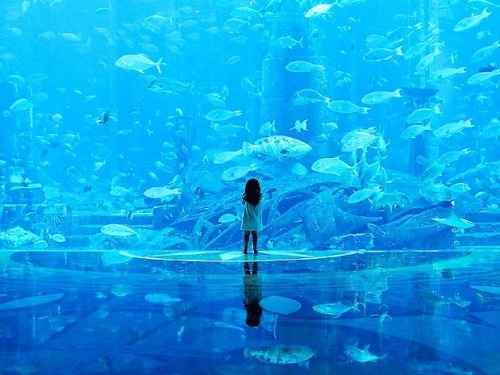 skulls-and-paint:  reaperking:  masterkenobiwan:  Okinawa Churaumi Aquarium - The Second Largest Aquarium in the World  I WANT TO GO  *o*