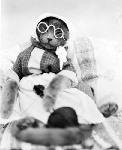 oldtimeycats:  Cat in Dress with Eyeglasses by State Historical Society of North Dakota on Flickr.
