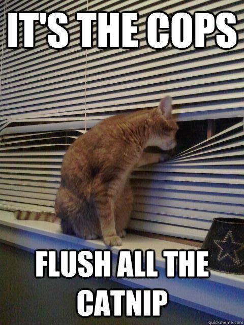 Flush ALL the Catnip!!!