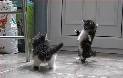 tea-and-kittens:  Hello kittens! If you re-blog my audio clip on my tumblr of myself singing, I will promote you for all of my 2,256 followers to see! follow these kittens :) http://curioworld.tumblr.com http://serenesunshine.tumblr.com http://xxbuttersnips.tumblr.com http://each-day-in-stride.tumblr.com (love your tumblr name) http://mr-yehznman.tumblr.com http://dissa1.tumblr.com http://as-sweet-as-may.tumblr.com http://thatonerussianryan.tumblr.com http://half-an-half.tumblr.com http://city-skin.tumblr.com http://inthelandofharrypotter.tumblr.com http://youcatbekittenmerightmeow.tumblr.com