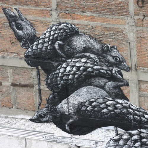 #ROA #mexicocity @allcitycanvas  (Taken with instagram)