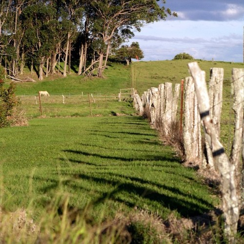 Fence posts and shadows, taken outside of #Waimea in North #Kohala, #BigIsland #Hawaii - #Kamuela #808 #hiig #hiinstagram #nature #shadows (Taken with instagram)