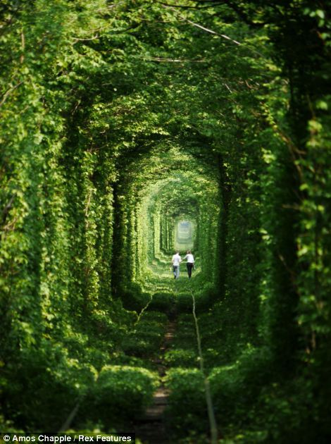 tunnel of love image