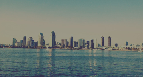 San Diego Skyline, taken from Glorietta Park on Coronado Island. submitted by clarencemaur